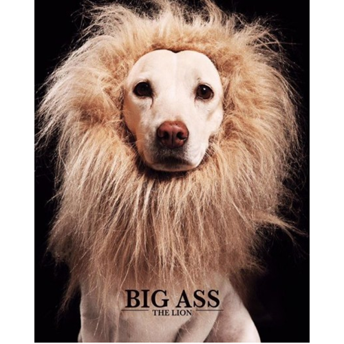 CD BIG ASS THE LION